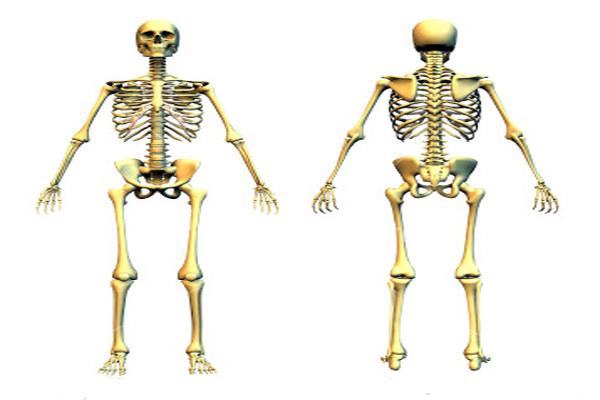 кости, нужны, зачем
