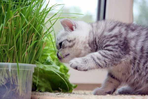 кошка, трава, еда