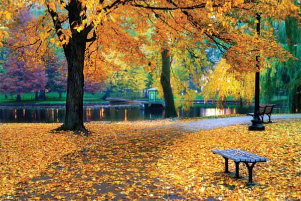 деревья, листья, сброс