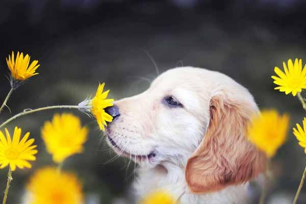 собаки, обнюхивать