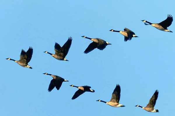 птицы, улетать, теплые, края