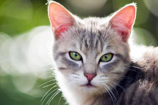 кошка, смотреть, глаза