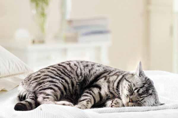 кошка, будить