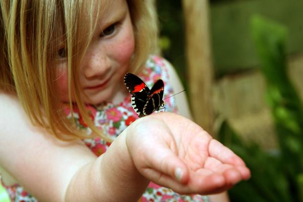 бабочка, руки, брать