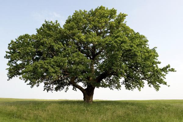 дерево, переставить