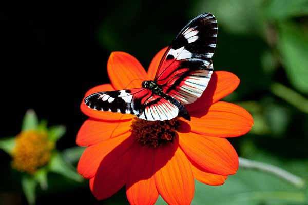 бабочки, ловить, цветы, рвать