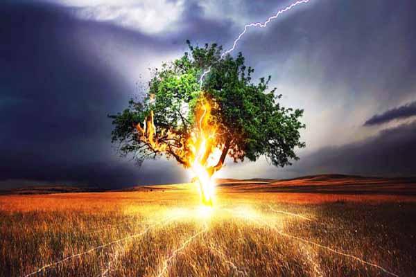 гроза, дерево, стоять