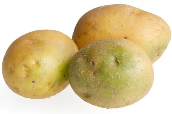 картошка, позеленевшая, есть, нельзя