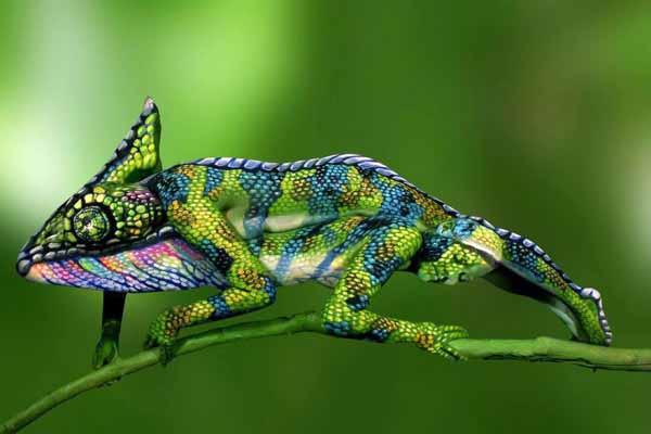 хамелеон, менять, цвет