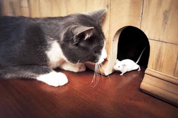 кошка, мышка, дружба