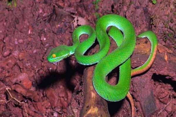 змеи, ноги, нет, почему