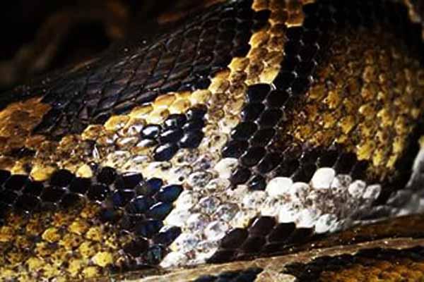 змея, чешуя, зачем