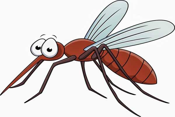 комар, зима, деваться