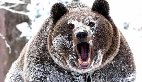 разбудить, медведя