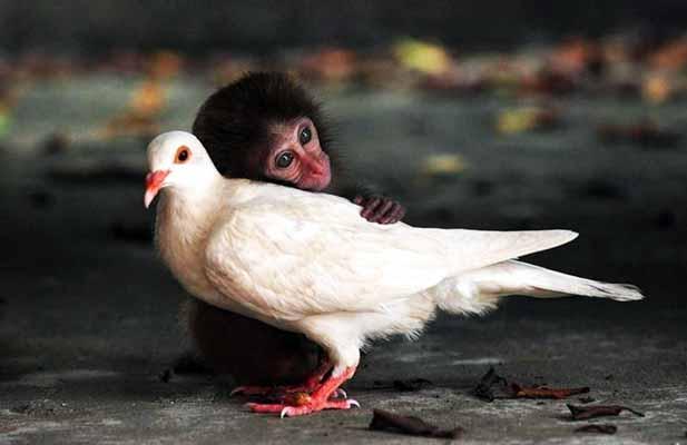 животные, душа