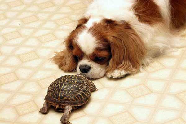 животные, общение