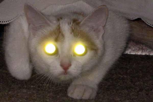кошка, глаз, гореть