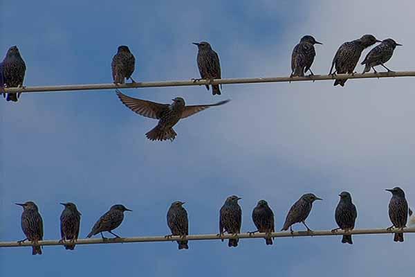 птицы,ток, провода