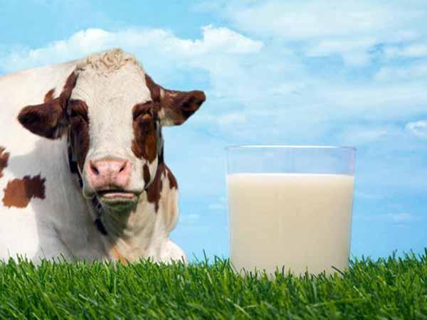 молоко, прокисает, почему