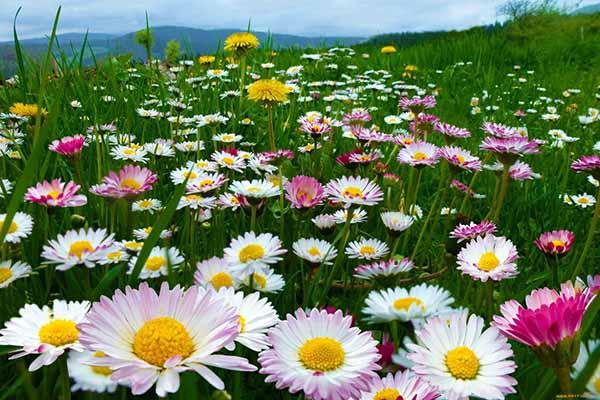 цветы, пение, музыка