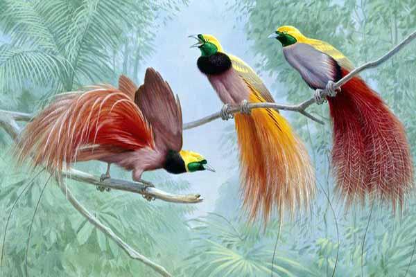 птицы, райские