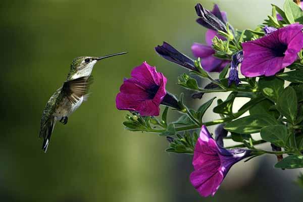 птица, летать, задом, наперед
