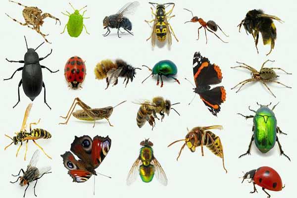 лекарства, насекомых, для