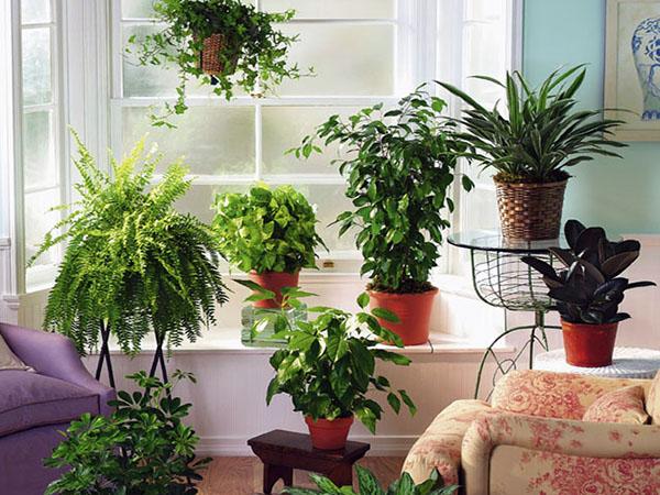 растения, комнатные